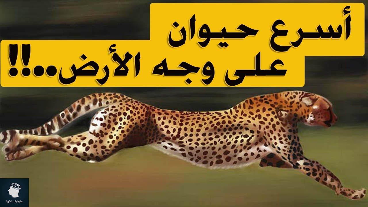 حقائق علمية ممتعة عن حيوان الفهد ..اسرع مخلوق على وجه الارض..!!