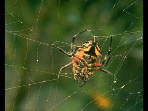 Science Today: Spider Silk Tech | California Academy of Sciences
