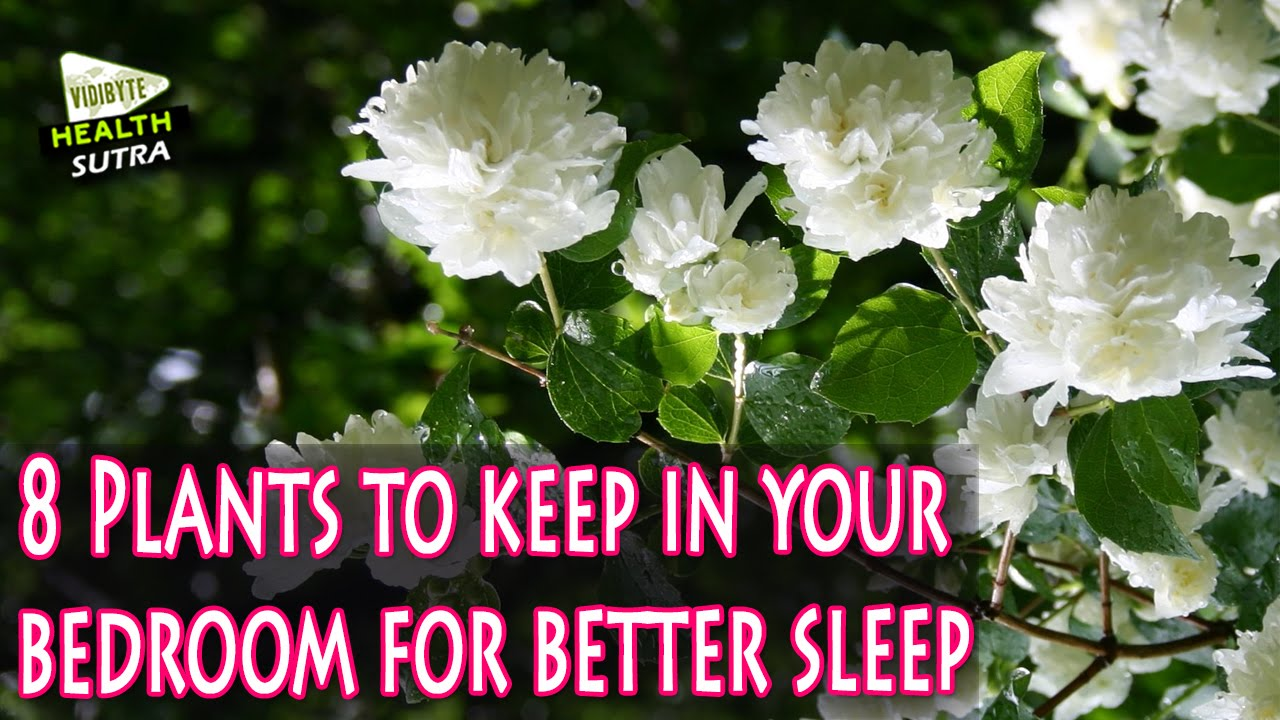 8 Plants To Keep In Your Bedroom For Better Sleep   YouTube