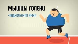 видео Мышцы голени: анатомия и упражнения