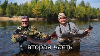 Дикие таймени Станового хребта 2 часть Быт в лагере Конкурс нож в подарок Сплав по реке Рыбалка