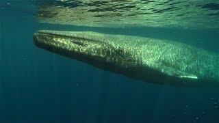 101動物教室:藍鯨大揭密! 《國家地理》雜誌