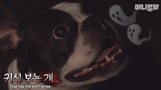 Would you believe that a dog can see ghosts?