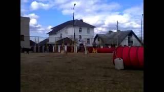 Аджилити КОСТРОМА с собакой Дворняжка