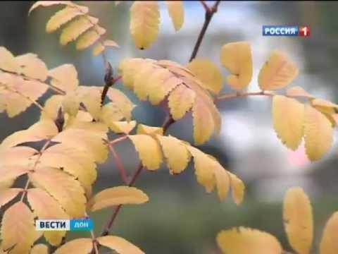В ближайшее время на Дону зимы не будет