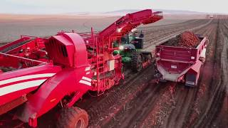 SPUDNIK Equipment Potato HARVEST 2017!!