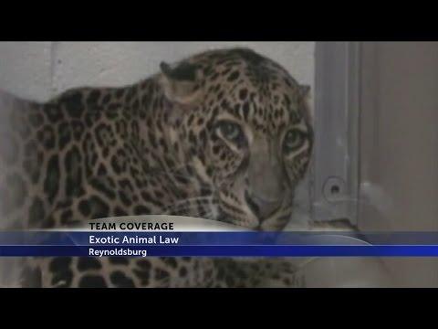 Zanesville Animal Escape: 4 Years Later