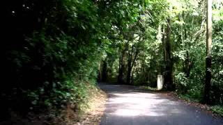 ST CROIX  Christiansted US Virgin Islands Tropical Rain Forest... 1-12-2012.MPG