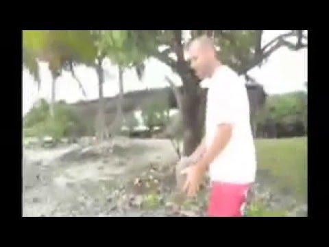 kicking coconuts cook islands