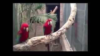 Подборка приколов #1. Танцы животных.