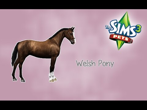 Creating a Welsh Pony + CC page release - The Sims 3