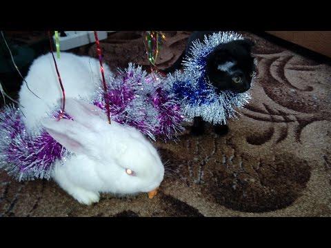 Вежливый кролик и смешная кошка  # Лайфхаки для кота. New jokes from fold cat and rabbit.