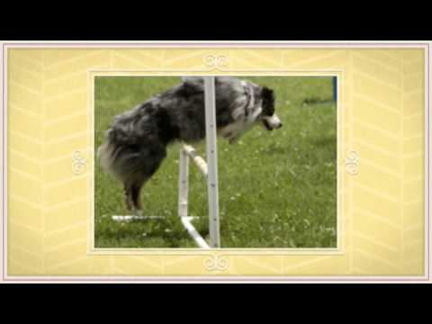 K9 Manners -  In Home Dog Training Whitby