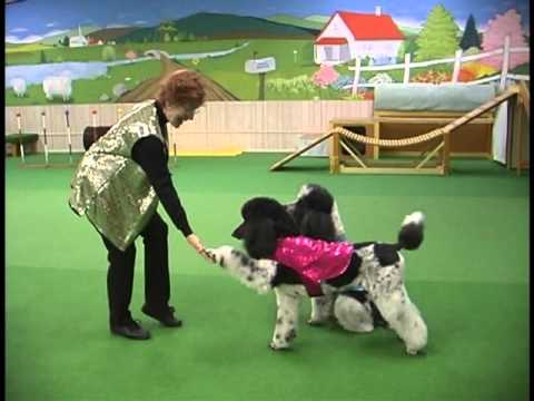 Dog Dancing:  Movie-style freestyle routine