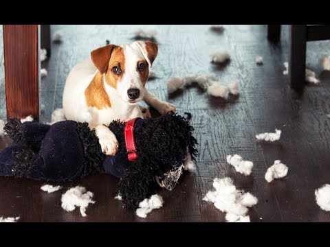 Dogs Feeling Guilty Compilation