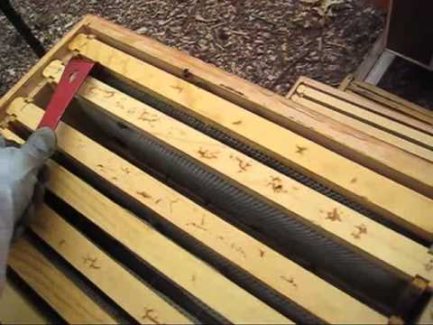 979aec309f2 Beekeeping  Wax or Plastic Foundations  Amazing Results - YouTube