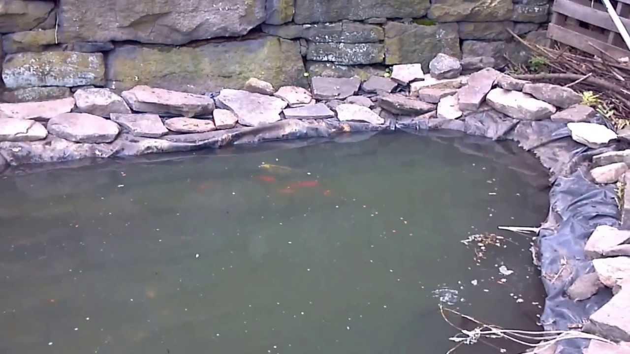 Spring Fed Koi Pond Redo