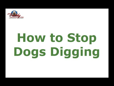 how-to-stop-dogs-digging-|-top-tips