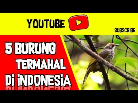 5 BURUNG TERMAHAL DI INDONESIA