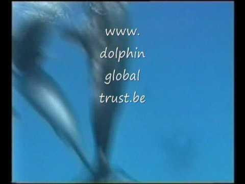 Swimming with Dolphins - Zwemmen met dolfijnen