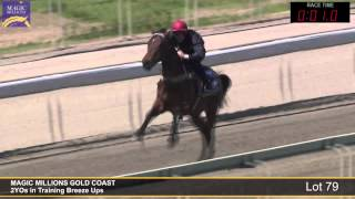 Lot 79 - 2YOs in Training Breezeup Thumbnail