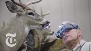 Taxidermy's Best in Show | The New York Times