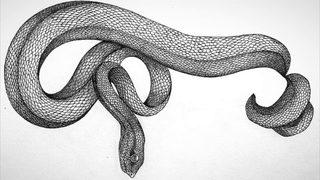 DRAWING TUTORIAL: How to Draw a Viper