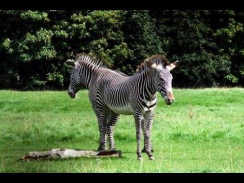 Animals With Weird Heads 3