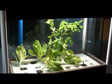 Small Scale Indoor Aquaponics System, MADE In The Philippines