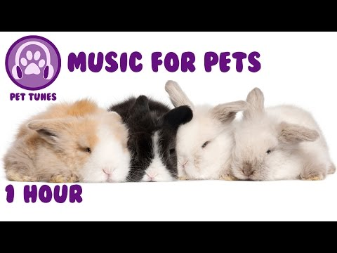 Music for pets - music to relax your pet and help them sleep - pet music