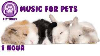Music for pets - music to relax your pet and help them sleep - pet music thumbnail