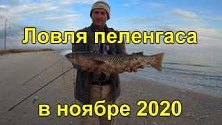 Ловля пеленгаса в ноябре 2020