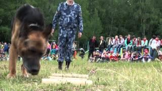 Почему волкособов не тренируют на людях рассказал кинолог ИК-13 ГУФСИН России по РБ