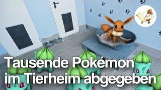 Tausende Pokémon im Tierheim abgegeben