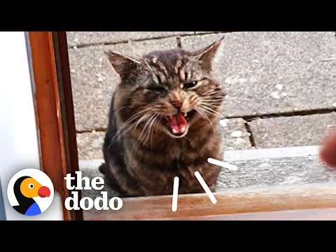 Stray Cat Decides To Move Into Guy's House   The Dodo Cat Crazy