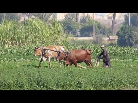 Egyptian Rural life