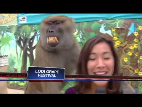Bobon Pegang Payudara Reporter TV (Lucu Kocak)