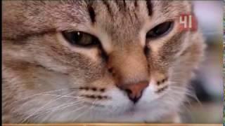 День кошек в Екатеринбурге