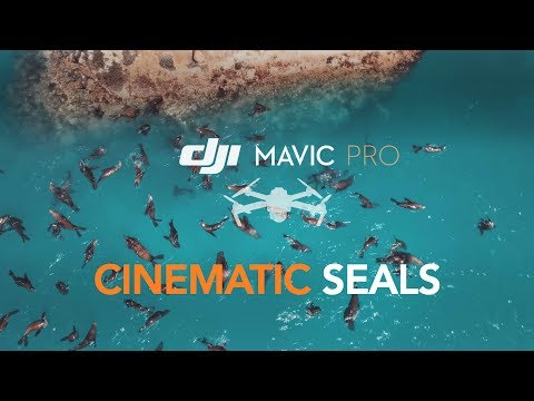 DJI Mavic Pro : Beautifully Color Graded Cinematic Footage Of Seals Having Fun In Cape Town