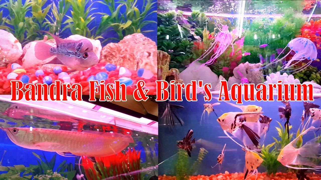 Fish aquarium india price - Fish Aquarium Shop In Mumbai India At Cheap Price Bandra Fish Bird S Aquarium