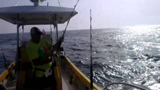 Yellowfin Tuna Fishing in Muscat Oman June 2013