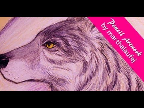 Wolf Pencil-Illustration By Marthalaufej