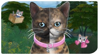THE SIMS 4 | BIRTH TO DEATH - CAT EDITION