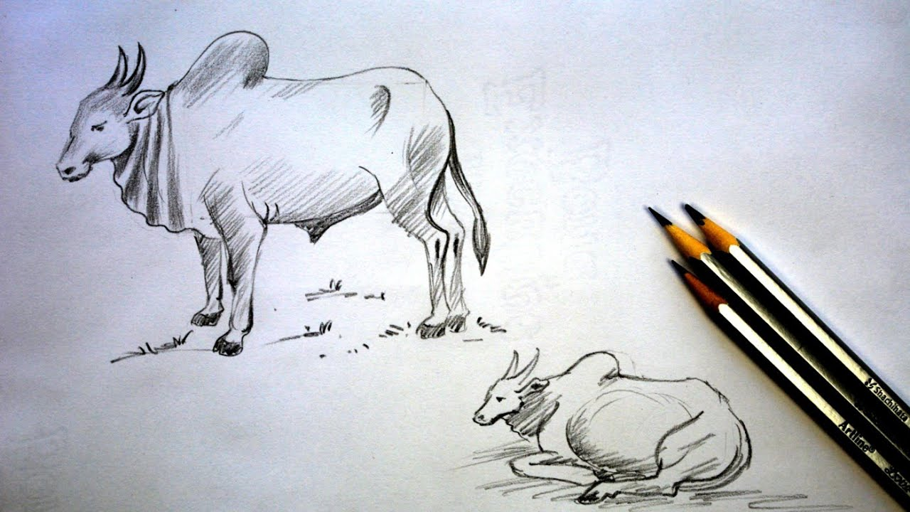 How To Draw Bull Youtube