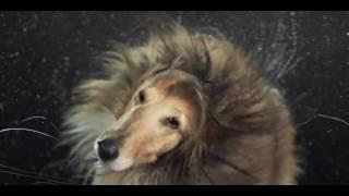 Новый красивый клип про собак 2017 года