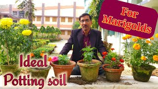 How to Make Ideal Potting Mix for Marigolds and all.