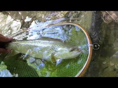 Pêche à la mouche sur la Birse