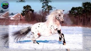 Красивые лошади.