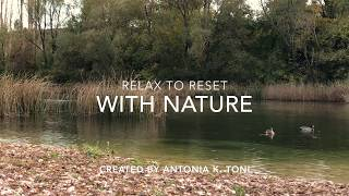 Relax to Reset - a short breather by a river (with ducks playing around)