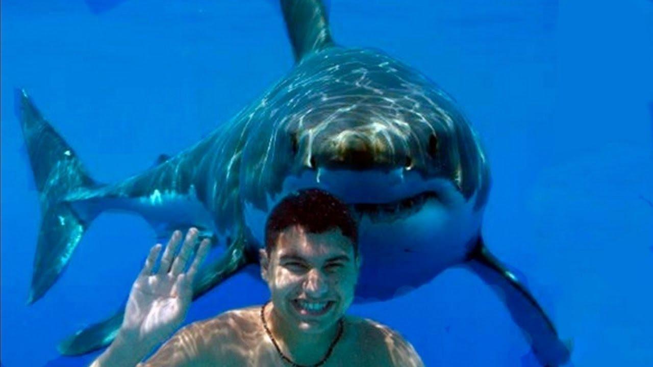 Smartest Shark Behavior